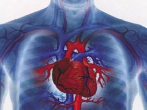 โรคหัวใจ และหลอดเลือด